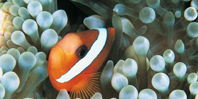 Afbeelding bij Tour Bluereef Aquarium Zeeland