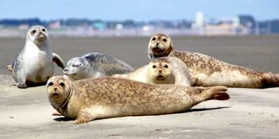 Afbeelding bij Zeehonden
