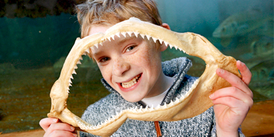 Afbeelding bij Children`s party – Meet the sharks
